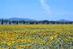 Più di un milione di stranieri cerca casa in italia: la Toscana è la regione preferita