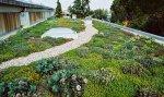 Il Tetto Verde: una nuova tendenza ecosostenibile che sta spopolando nelle case in città
